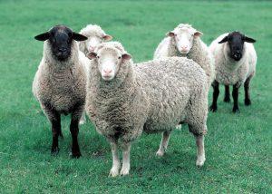 tkdk hayvancılık destekleri