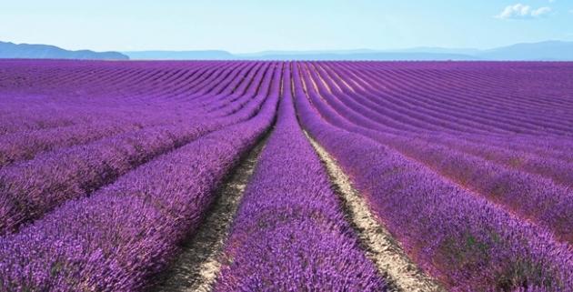 Hibe Destek Olan Tıbbi Aromatik Bitki Listesi