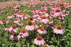 Tıbbı Bitkiler Hibe Desteği